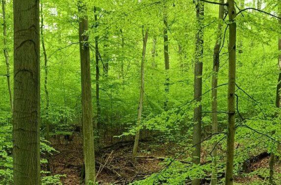 Intaktes Ökosystem im Stadtwald Harterscheid
